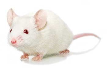 Animal Models for Research